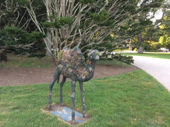 1 Murray House Bed & Breakfast : Topiary Camel at Doris Duke;s former home The Breakers