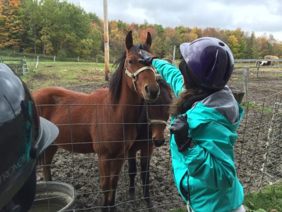 Ripley, NY: petting the horses