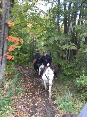 Ripley, NY: Horses behind