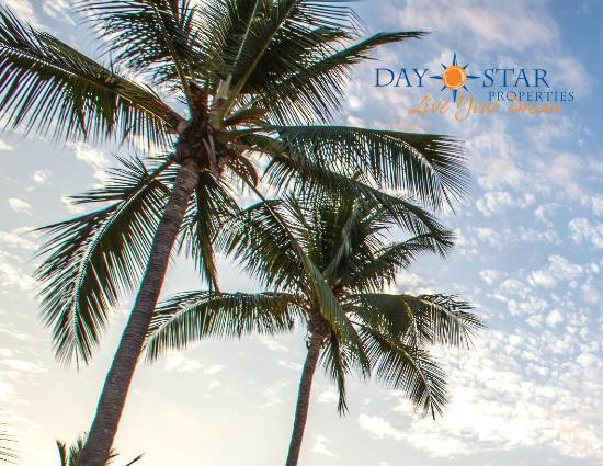 Daystar Center Jaco : Palms tress