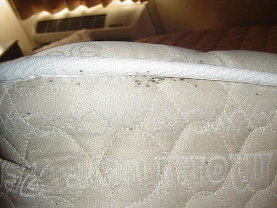 Auburn Hills, MI: Bed bugs in mattress