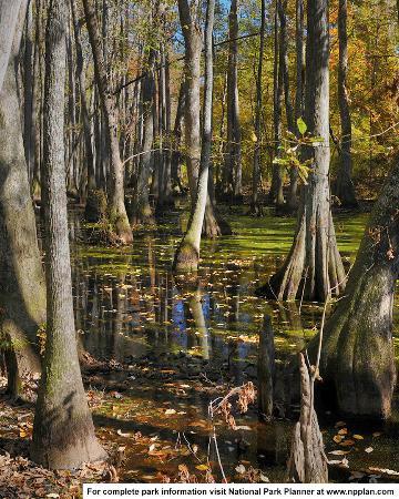 Cypress Swamp, Natchez Trace Parkway MP 122