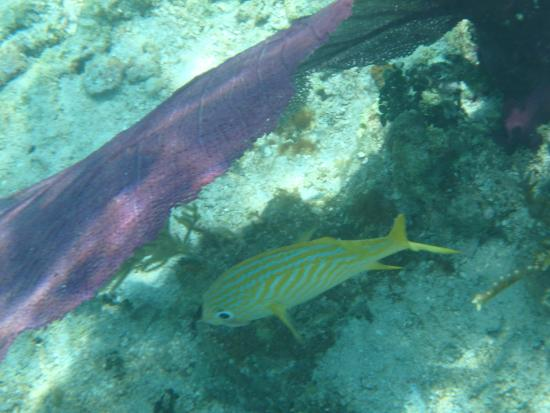 Snorkeling Wonders Of The Barrier Reef Picture Of Belize Cruise Excursions Belize City