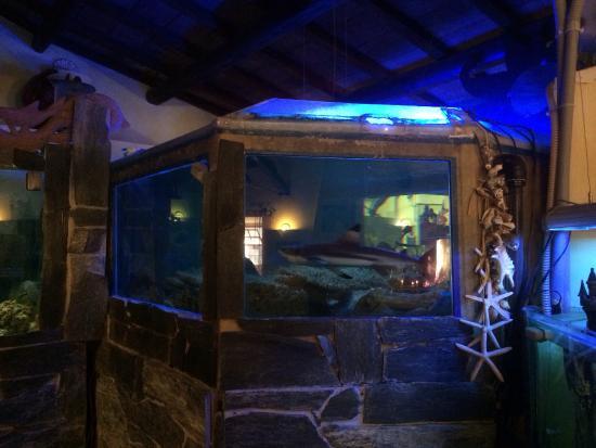 Fiumicino, Italia: Il povero squalo impazzito nella sua minuscola prigione