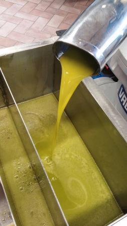 Tenuta Santo Pietro: Pure as pure can get Olive Oil!!