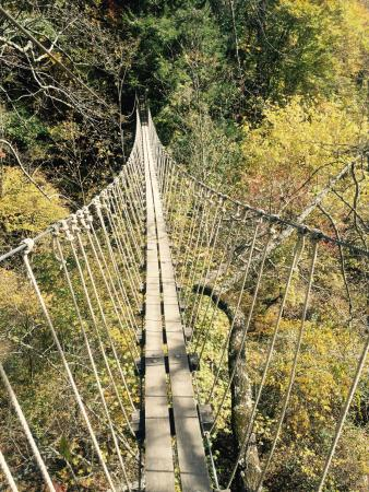 Navitat Canopy Adventures - Asheville Zipline Sky Bridge & Sky Bridge - Picture of Navitat Canopy Adventures - Asheville ...