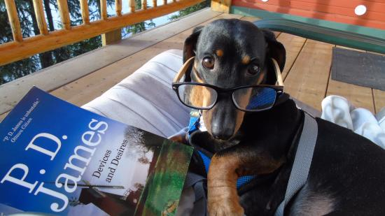 Idabel Lake Resort: Ozzie reading on the deck (pets are allowed)
