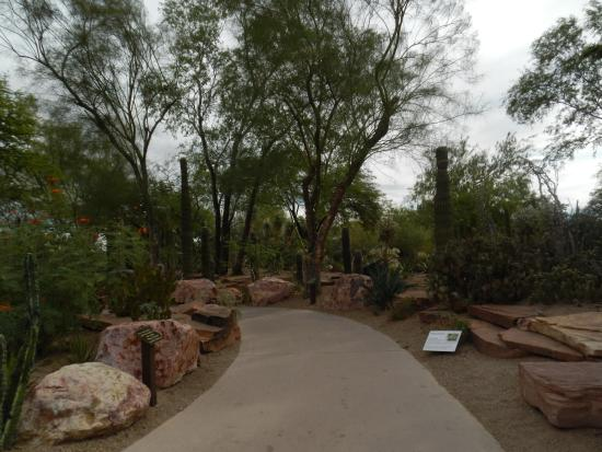 Cactus garden picture of ethel m chocolates factory and - Ethel m cactus garden christmas 2017 ...