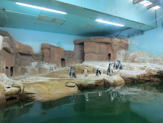 Ocean Aquarium: Penguins