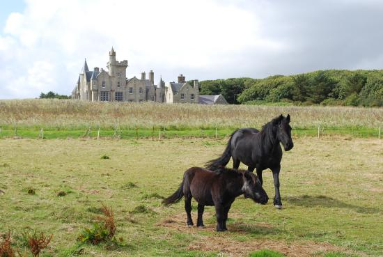 Shapinsay, UK: HORSES NEAR THE BALFOUR CASTLE