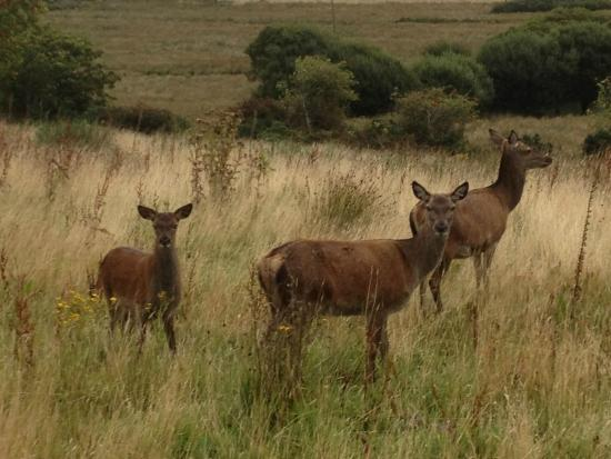 Jura Island Tours -Day Tours: Small family group of hinds in Keils