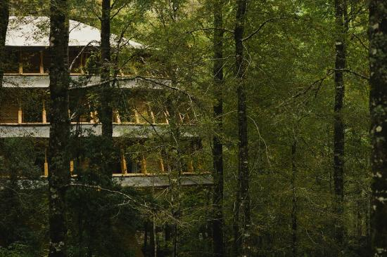 Huilo Huilo Reino Fungi Lodge
