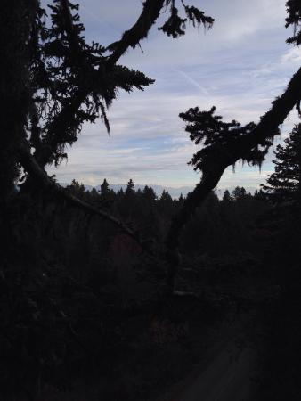 Accrobranche D'un arbre a l'autre