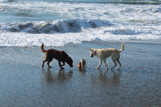 Smith River, كاليفورنيا: Enjoy the ocean