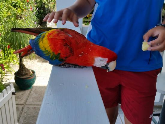 ReefView Apartments: Resident parrot