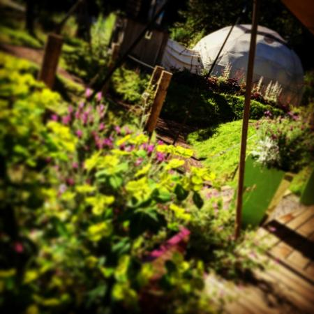 Dome Garden: Lovely Sunny Summer in the Garden