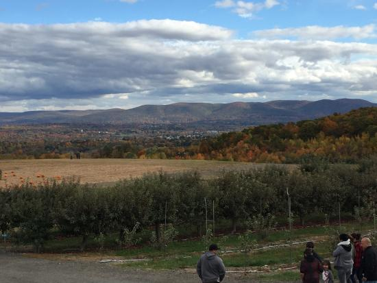 Lawrence Farms Orchards Photo