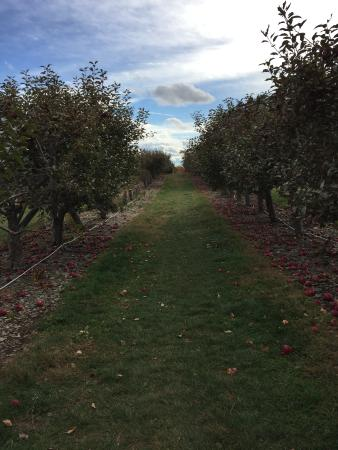 Lawrence Farms Orchards Foto
