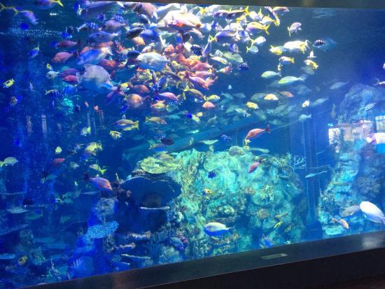 スナドリネコさん - Picture of Toba Aquarium, Toba - TripAdvisor