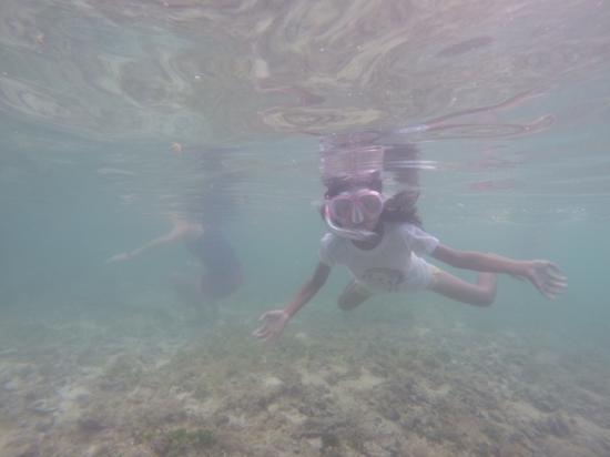 Bamboo Garden Bar and Lodging: awsome snorkelin