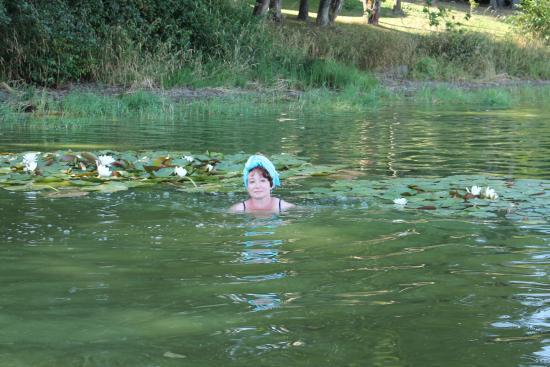 Frymburk, República Checa: Лилии на озере