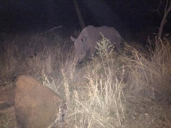 Mhondoro Game Lodge: rhino during night drive