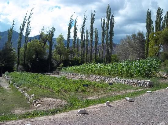 Foto de jardin botanico de altura tilcara gram neas y for Arbusto de jardin