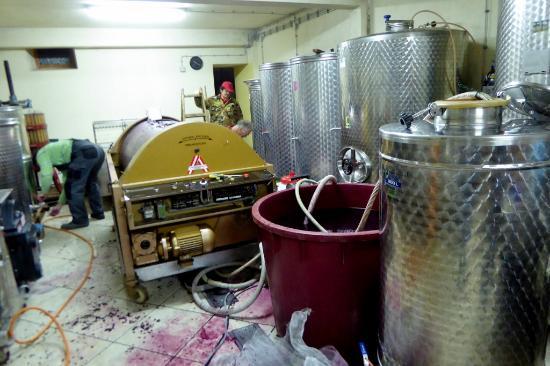 Sveti Martin, Croatia: Der Weinkeller