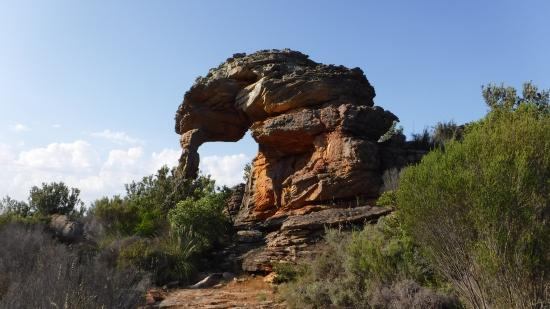The most amazing plants. - Picture of Oorlogskloof Nature Reserve,  Nieuwoudtville - Tripadvisor