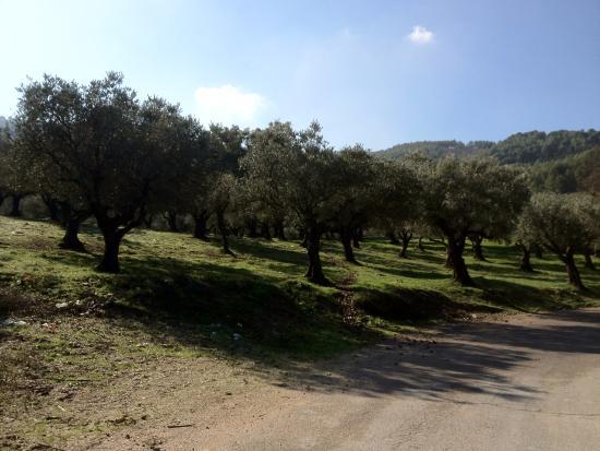Biriya Forest