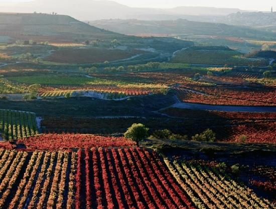 Azofra, España: alrededores, campos de la rioja