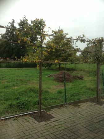 Knesselare, Belgien: view from our room