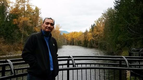 Adams River Salmon Run: Adam's River Viewing Platform