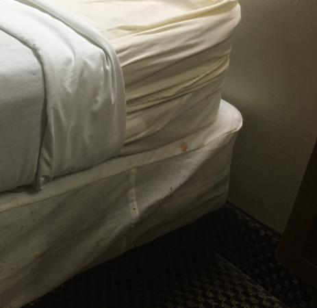 GuestHouse Inn Pigeon Forge : SOMEONE ELSE'S BLOOD