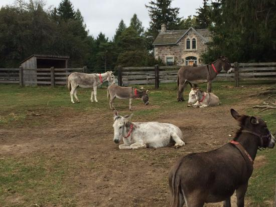Donkey Sanctuary of Canada