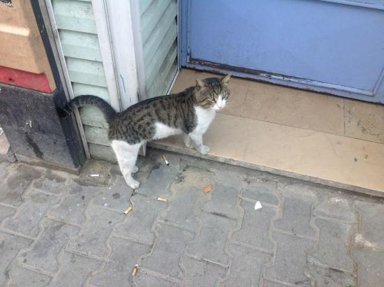 Stray Cat Hostel: One of the many local visitors