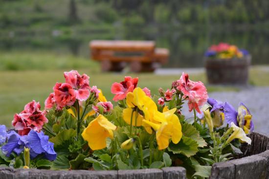 Moose Pass, อลาสกา: flowers