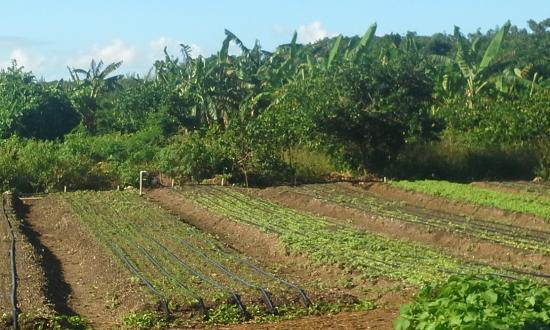 Eleuthera Island Farm