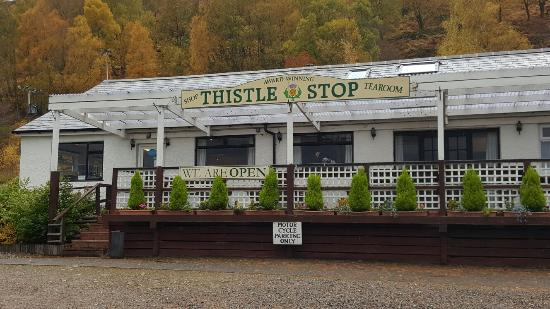 The Thistle Stop: 20151029_100742_large.jpg