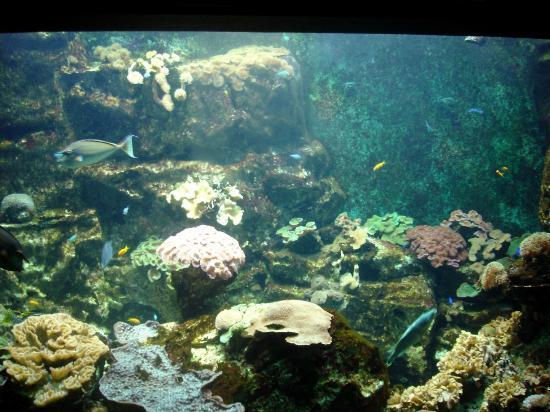 aquarium st malo photo de grand aquarium malo tripadvisor
