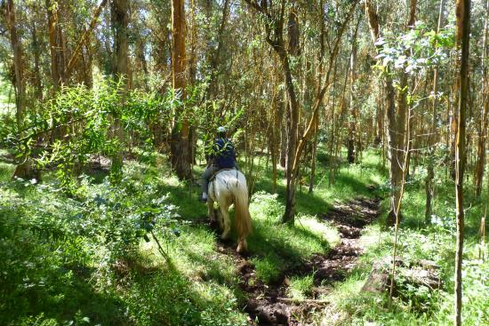 Pony Express Tours: Eucalyptis forrest smells so good.