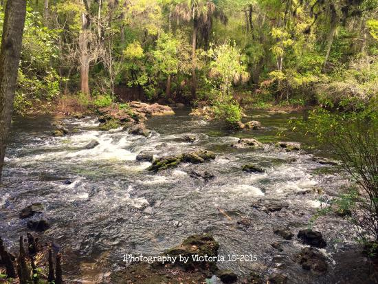 Picture of hillsborough river state park for Hillsborough river fishing