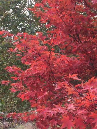 Wayne, Pensylwania: Autumn red!