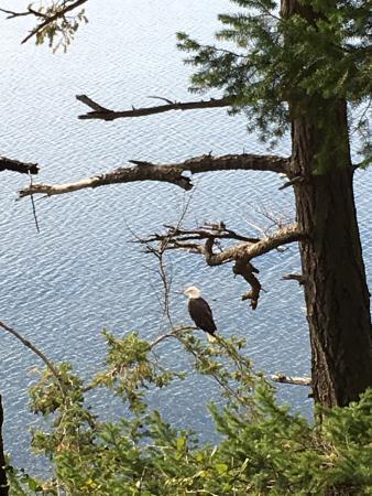 Camano Island, WA: Eagle