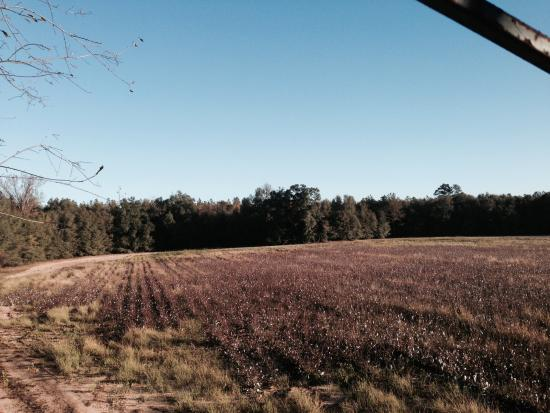 Allendale, Carolina del Sur: One of many field stands