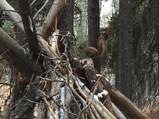 Cypress Hills Interprovincial Park: Chipmunk sitting on snowy teepee