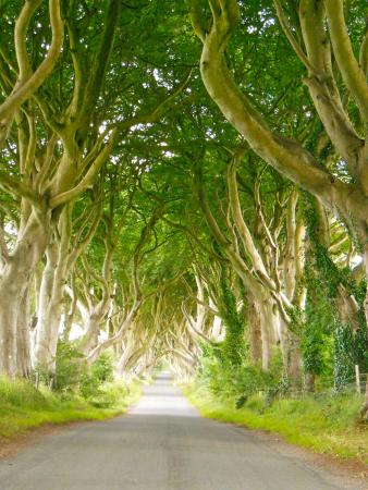 Ballymoney, UK: Taking a walk under the trees....