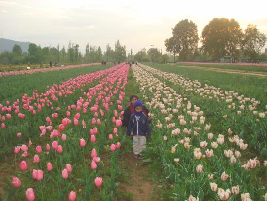 In garden picture of mughal gardens srinagar tripadvisor Mughal garden booking