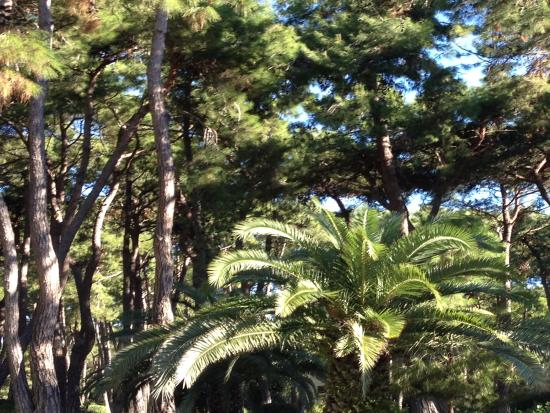 Turquoise Resort Hotel & Spa : Jardin