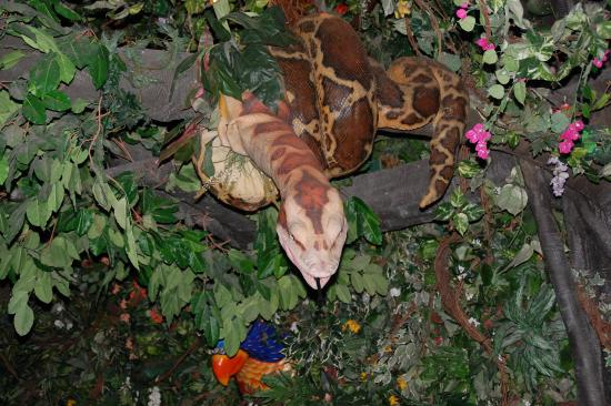 Rainforest Cafe - Disney Animal Kingdom : Look up above you
